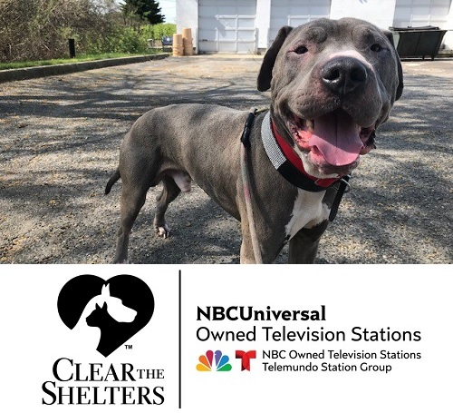 NBC Logo with Pit-mix Zeus smiling at the camera